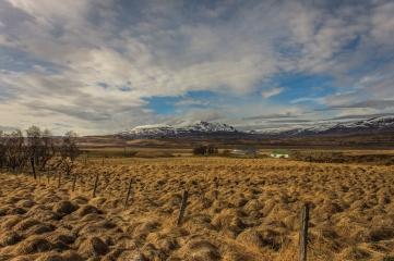 Icelandic Fields - Iceland