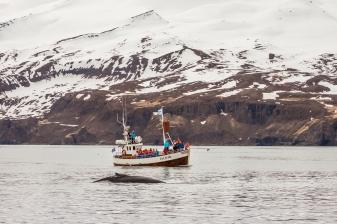 Whale Watching in Húsavík - Húsavík, Iceland