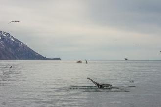 Diving - Húsavík, Iceland