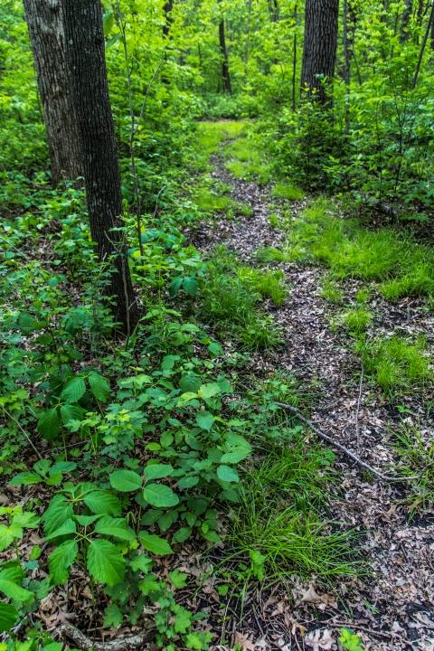 Green Path - Waseca, Minnesota