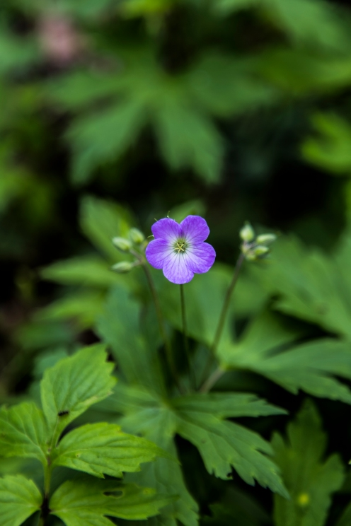 A flower in the woods - Waseca, Minnesota