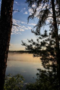 Misty woods - Bear Head Lake State Park, Minnesota