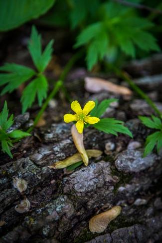 Flower on a fallen tree - Owatonna, Minnesota