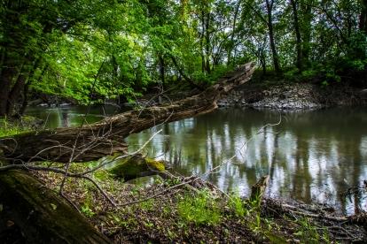Fallen log - Straight River, Owatonna, Minnesota
