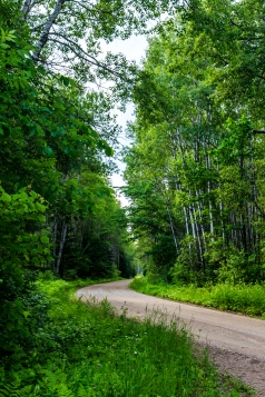 Forest Road - Chippewa National Forest, Minnesota