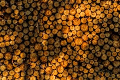 Shadowed logs - Chippewa National Forest, Minnesota