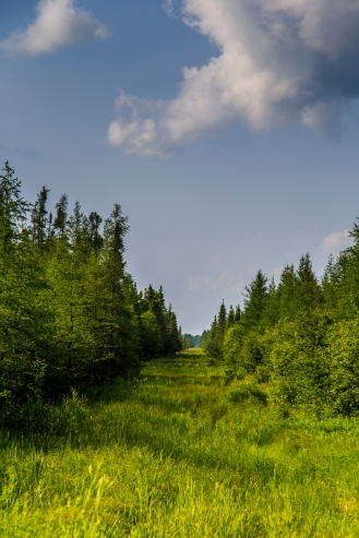 Into the Woods - Chippewa National Forest, Minnesota