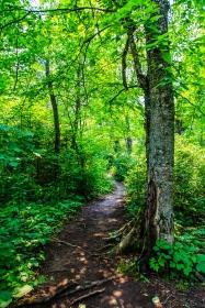 Forest Trail - Chippewa National Forest, Minnesota