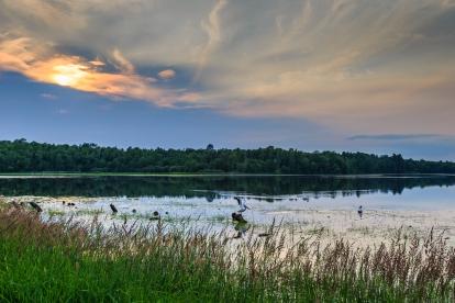 Evening Pelicans - Dora Lake, Chippewa National Forest, Minnesota