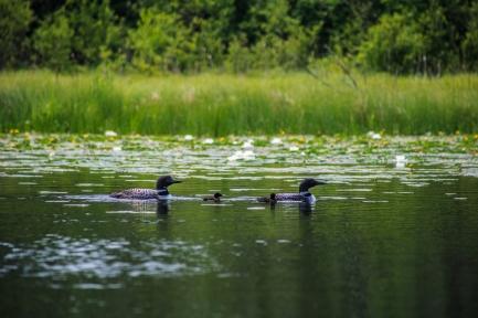 Parents - Holland Lake, Chippewa National Forest, Minnesota