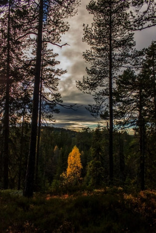 Alone in Autumn - Nordmarka, Norway