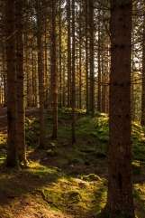 Mossy Forest - Nordmarka, Norway