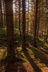 Norwegian Woods - Nordmarka, Norway