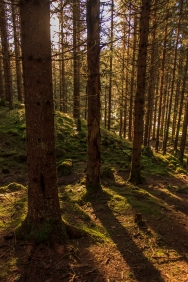 Norwegian Woods - Nordmarka, Norway
