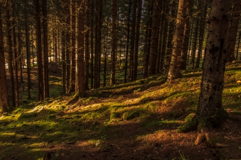 Forest of Shadows - Nordmarka, Norway