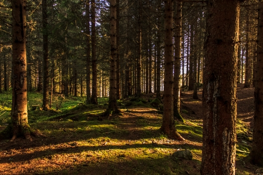 Shadowed Woods - Nordmarka, Norway