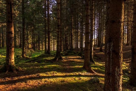 Shadowed Woods - Nordmarka, Norway