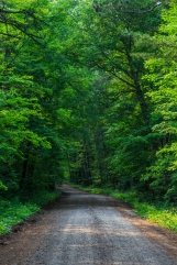 Road through the woods - Lost 40, Chippewa National Forest, Minnesota