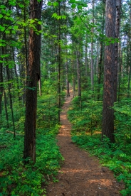 Forest Path - Lost 40, Chippewa National Forest, Minnesota