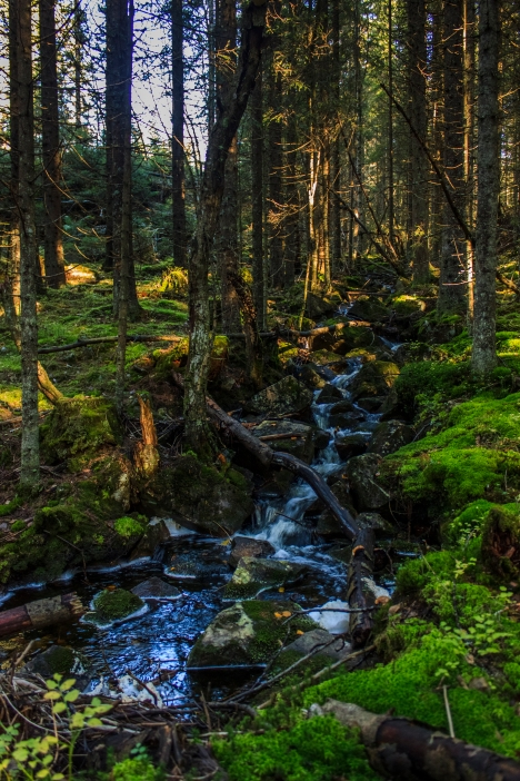 Forest Brook - Nordmarka, Norway