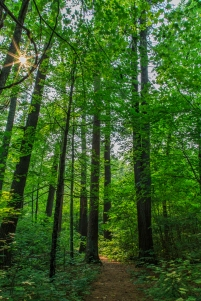Forest of light - Lost 40, Chippewa National Forest, Minnesota
