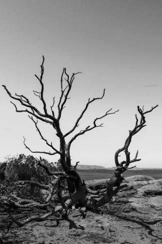 Deadwood - Arches National Park, Utah