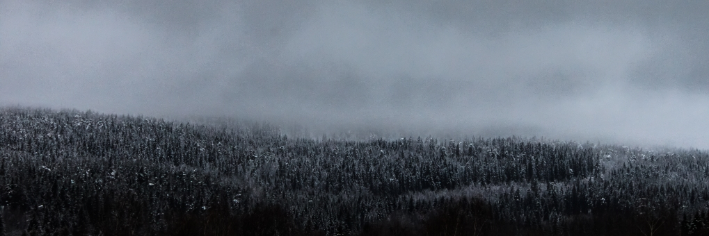Winter Fog - Kringsjå, Norway