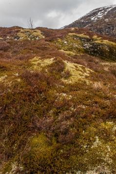 Mountain Heath - Lofoten, Norway