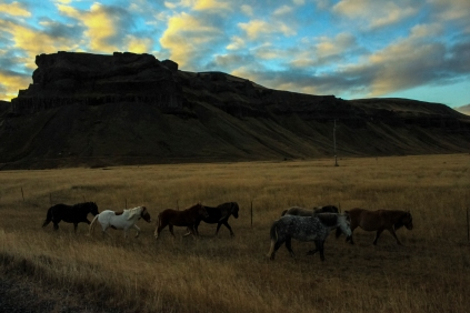 Follow the leader - Iceland