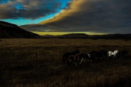 Horses at sunset - Iceland