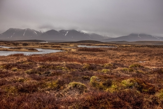 Heath before mountains - Iceland