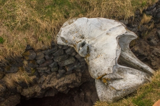 Whalebone Well - Iceland