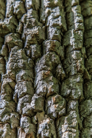 Tree Bark - Great Falls Park, Virginia