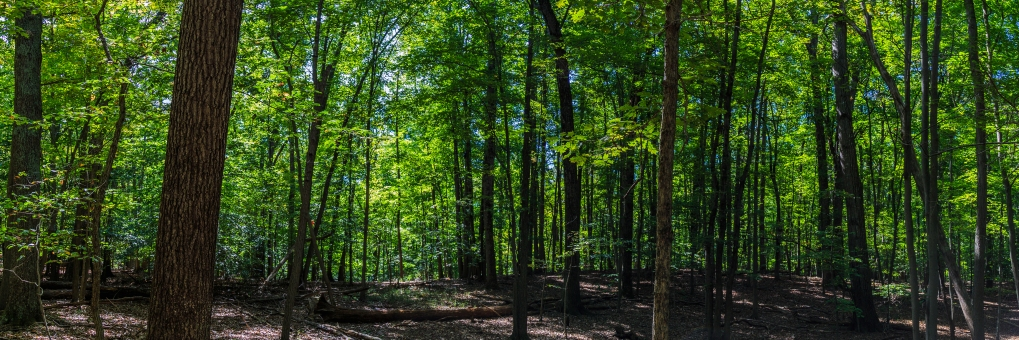 Forest Panorama - Great Falls Park, Virginia