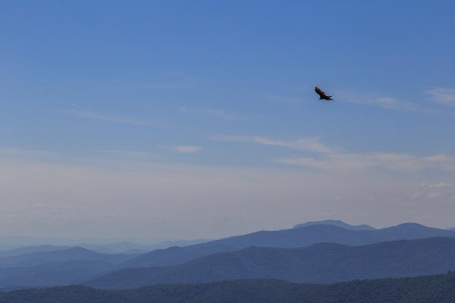 Flying towards blue mountains - Shenandoah Panorama Series 1 - Shenandoah National Park, Virginia