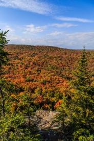 Autumn Forest near Lutsen - Superior National Forest, MN