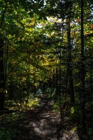 Superior Hiking Trail - Lutsen, MN