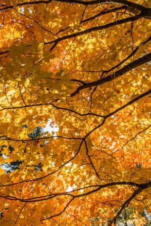 Forest Veins - Lake Bemidji State Park, MN