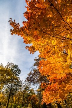 Through the colored leaves - Lake Bemidji State Park, MN
