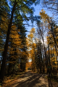 Road through the autumn woods - The Lost Forty, MN