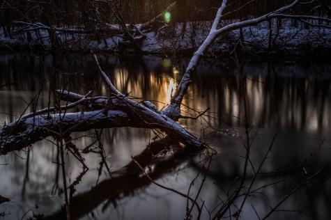 Snow on fallen branches - Straight River, Owatonna, Minnesota