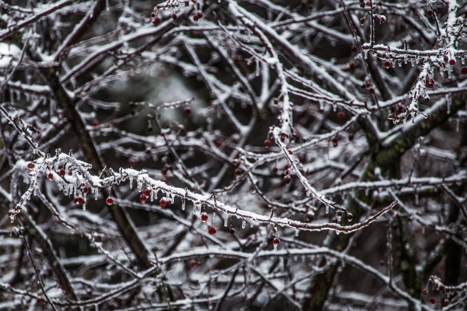 Icy Branches - Owatonna, Minnesota