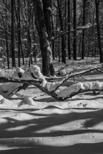 Rice Lake State Park - Winter