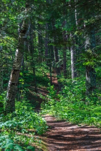 The Lost 40 - Chippewa National Forest