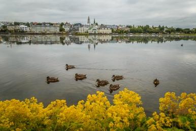 Tjörnin Lake in Reykjavík - Iceland