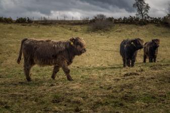Near Culloden Battlefield, Inverness, Scotland