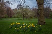 Buckingham Palace Grounds - London, England