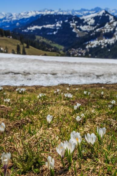 View from Mount Rigi, Switzerland