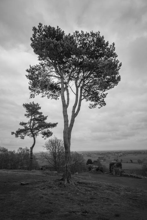 Hilltop Trees - Beeston Castle, Cheshire, England
