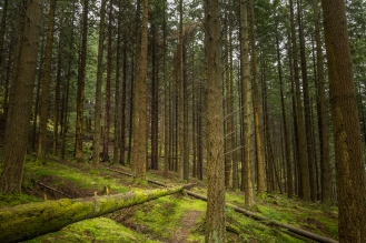 Tall Timber - Trossachs National Park, Scotland
